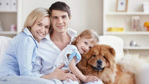 Wills & Trusts dog-young-family Direct Wills Solihull Lodge